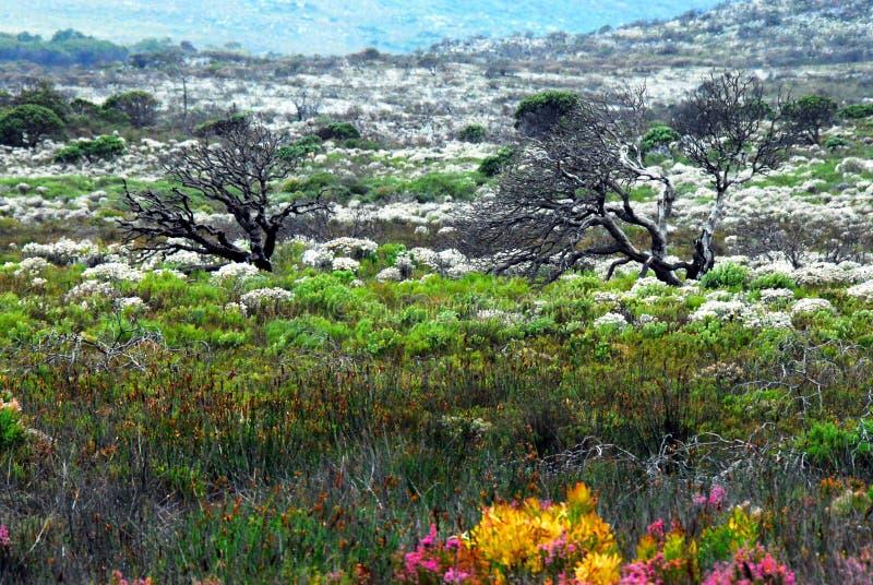Een Panoramisch die Landschap met Kleurrijke Wildflowers wordt gevuld royalty-vrije stock afbeeldingen