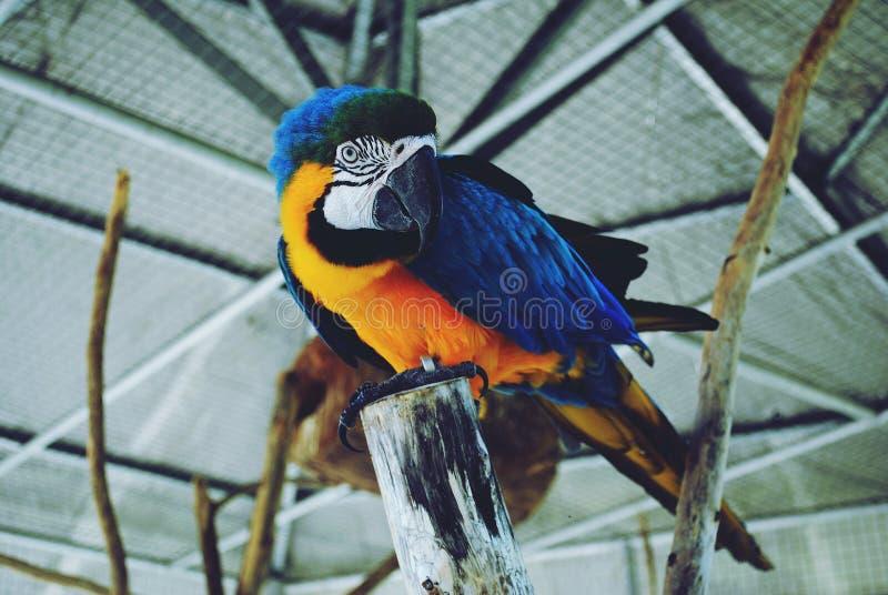 Een Papegaai stock afbeeldingen