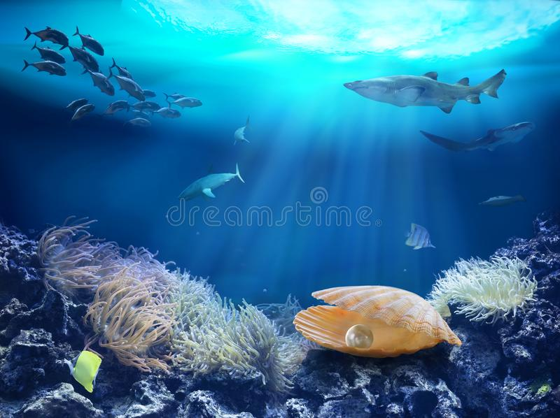 Een parel bij de bodem van het overzees stock foto's