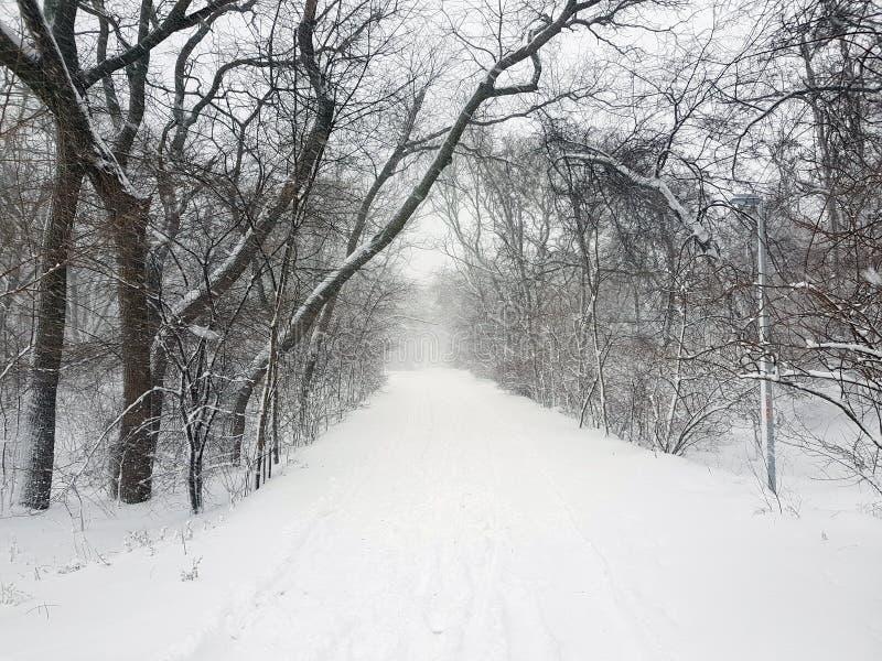 Een park in de sneeuw in een onweer royalty-vrije stock afbeeldingen