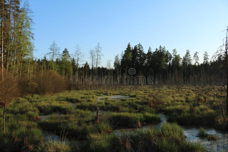 Een park in Litouwen II royalty-vrije stock fotografie