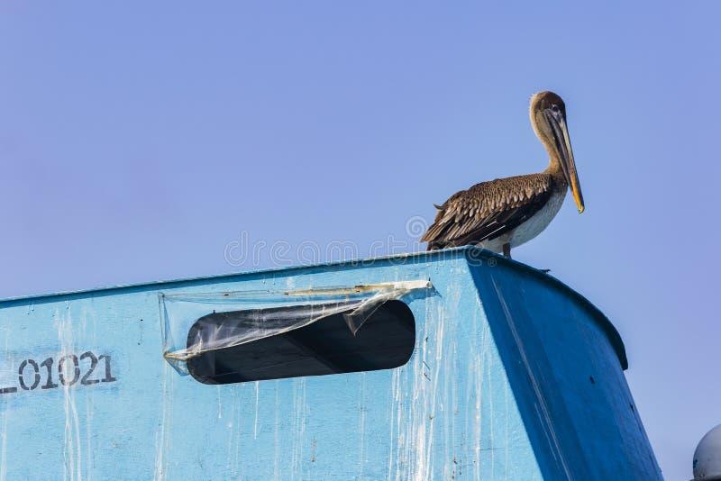 Een Pelikaan die zich op het dak van een boot bevinden stock afbeelding
