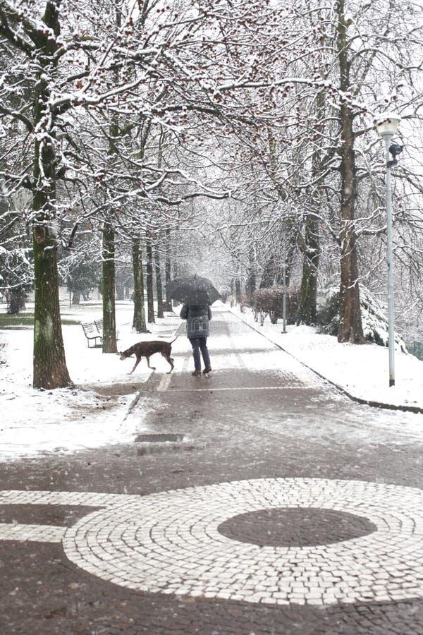 Een persoon met een hond en de paraplu in een behandelde sneeuwboom voerden weg in een stadspark stock foto's