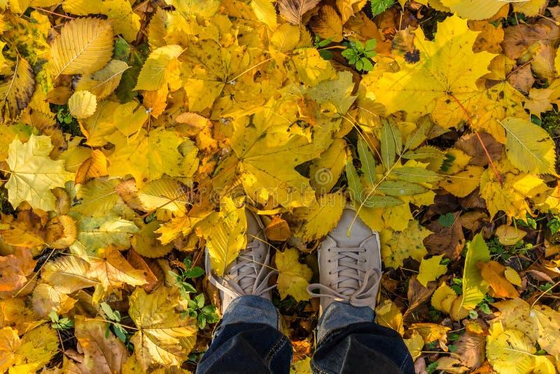 Een persoon in schoenen die zich in herfstbladeren bevinden royalty-vrije stock afbeeldingen