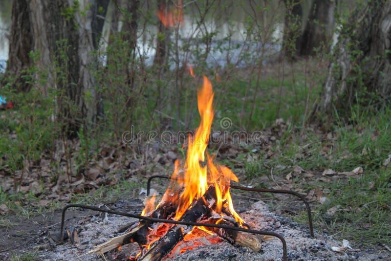 Een picknick met een kampvuur in het hout stock fotografie