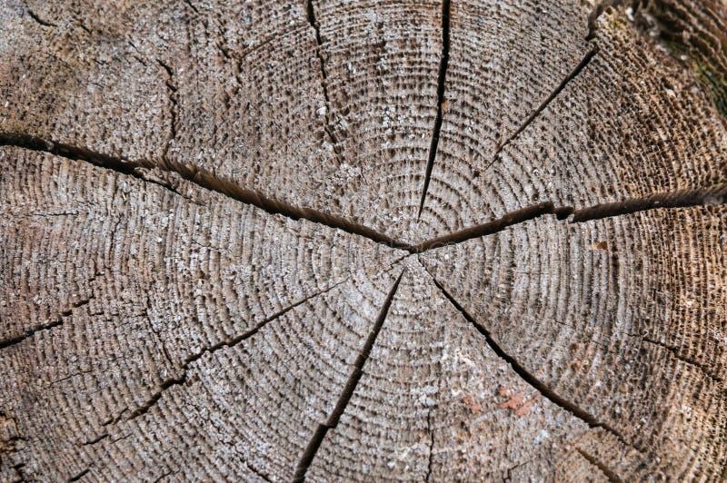 Een plak van een oude boom met concentrische jaarringen en een barst in het centrum De textuur van de oude boom royalty-vrije stock fotografie