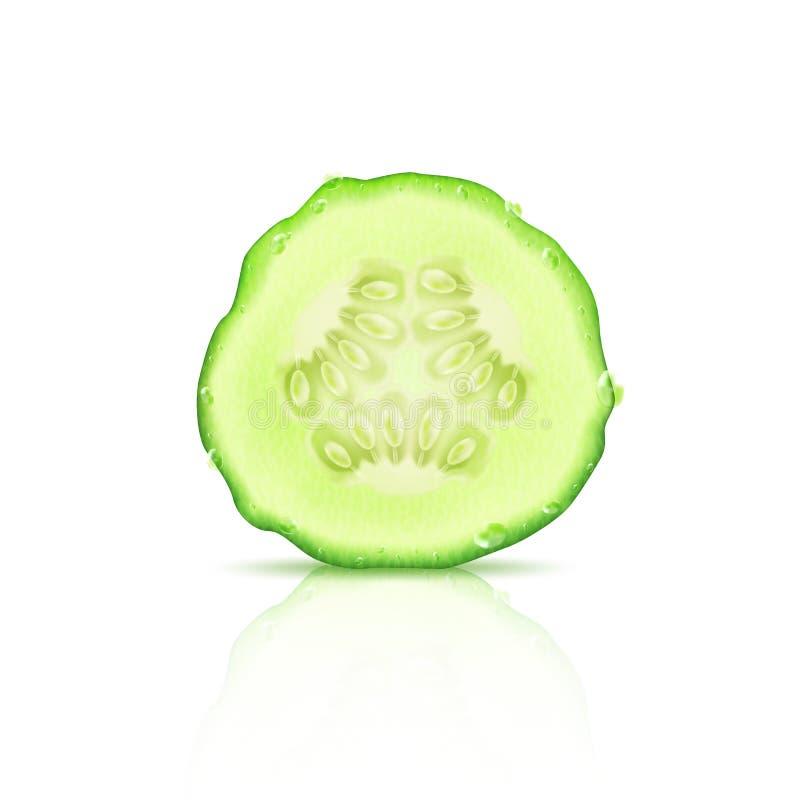 Een plak van realistische sappige komkommer, op een witte achtergrond met bezinning, vector royalty-vrije illustratie