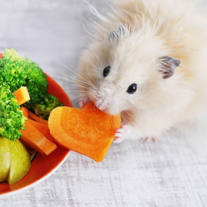 Een pluizige hamster stock afbeeldingen