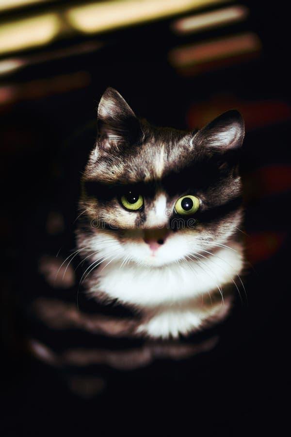 Een portret van kleine in dark met licht van het venster royalty-vrije stock foto