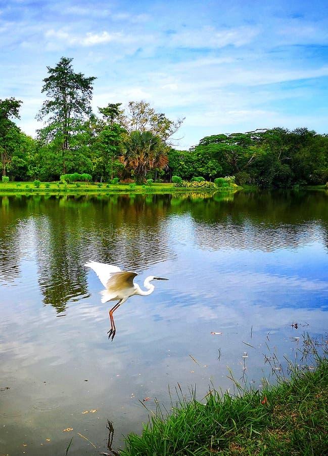 Een prachtig meer met een vliegende vogel royalty-vrije stock fotografie
