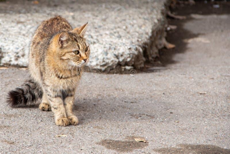 Een prachtige tabby stray kat zit op de grond tegen de achtergrond van een oude muur, een sluiting Verlaten dieren royalty-vrije stock fotografie