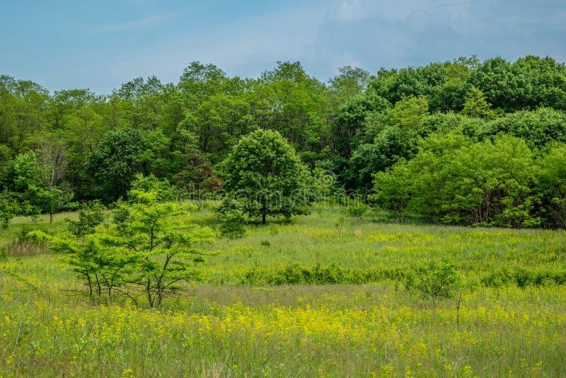 Een prairie van midwesten en een boslandschap stock foto