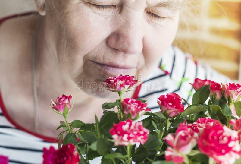 Een prettig bejaarde verheugt zich bij de rozen, inhalerend hun aroma stock foto