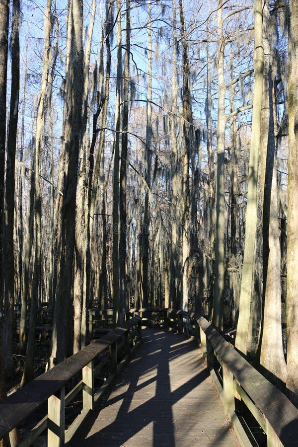 Een Promenade in een Cipresmoeras royalty-vrije stock afbeelding