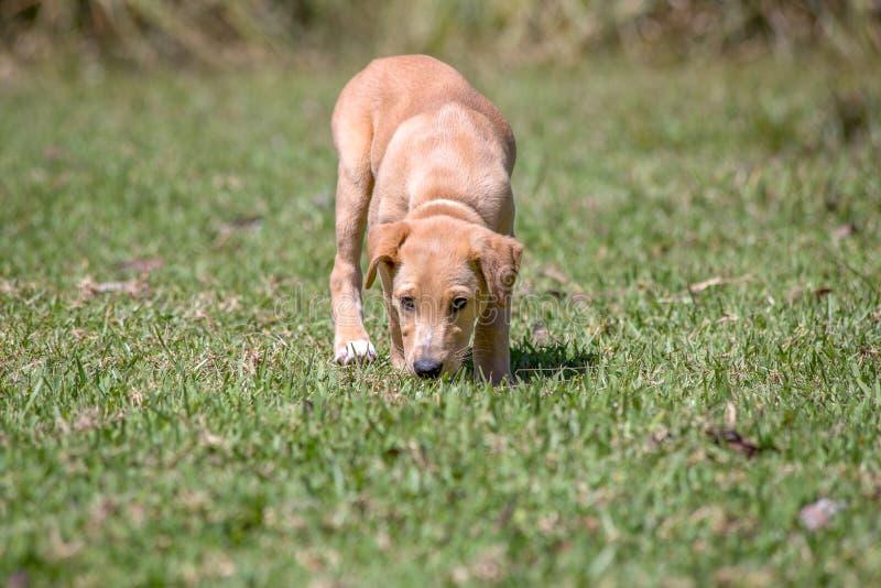 Een puppy onderzoekt zijn nieuw milieu royalty-vrije stock afbeeldingen