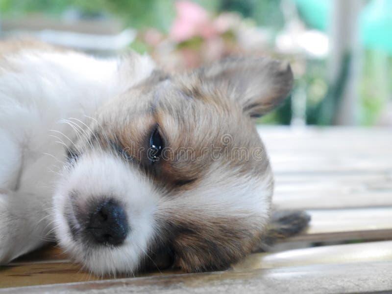 Een puppyslaap royalty-vrije stock foto