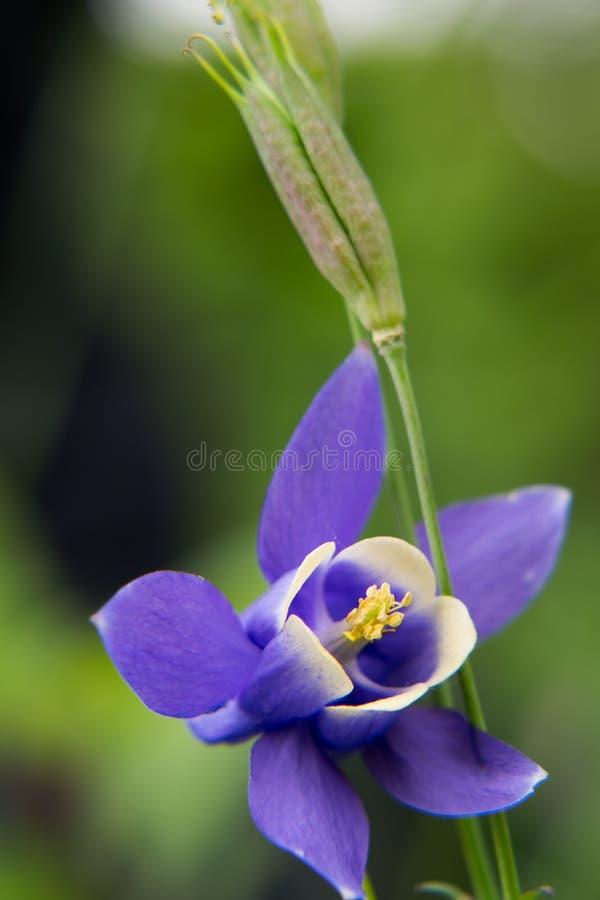 Een purpere bloem stock foto