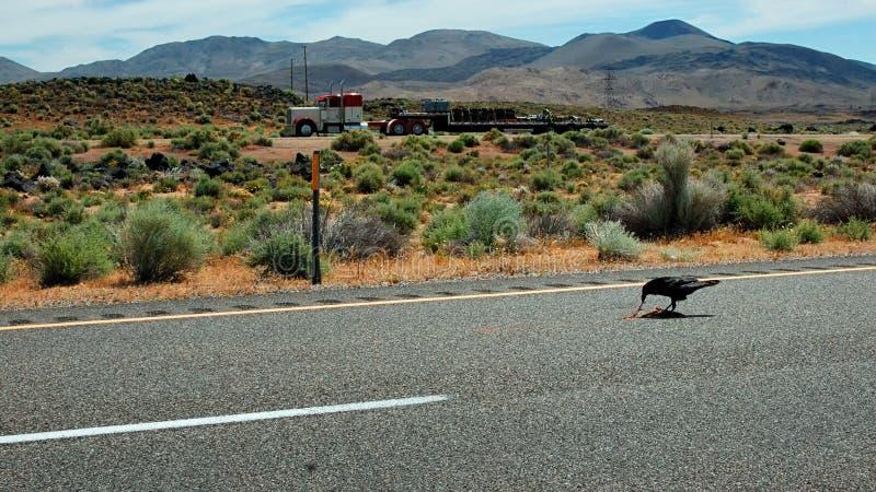 Een raaf die één of ander wegdoden ergens langs weg 395 in de Mojave-Woestijn in Californië opnemen als vrachtwagen gaat over doo stock afbeelding