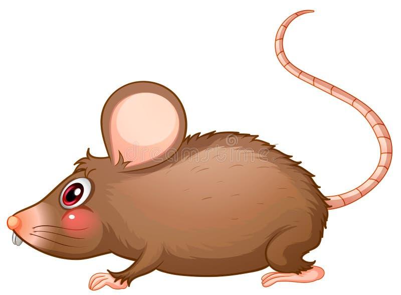 Een rat met een lange staart royalty-vrije illustratie