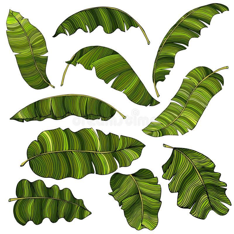 Een reeks exotische, helder groene die banaanbladeren, op een witte achtergrond worden geïsoleerd