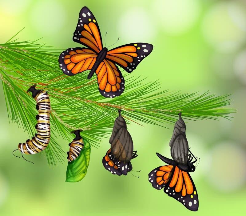 Een Reeks van de Cyclus van het Vlinderleven royalty-vrije illustratie