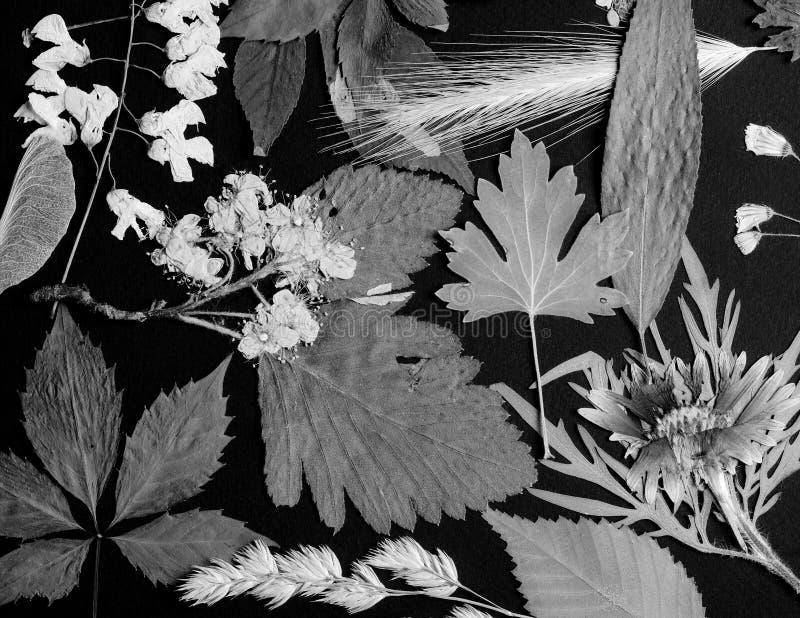Een reeks van gedrukte wildernis royalty-vrije stock foto's