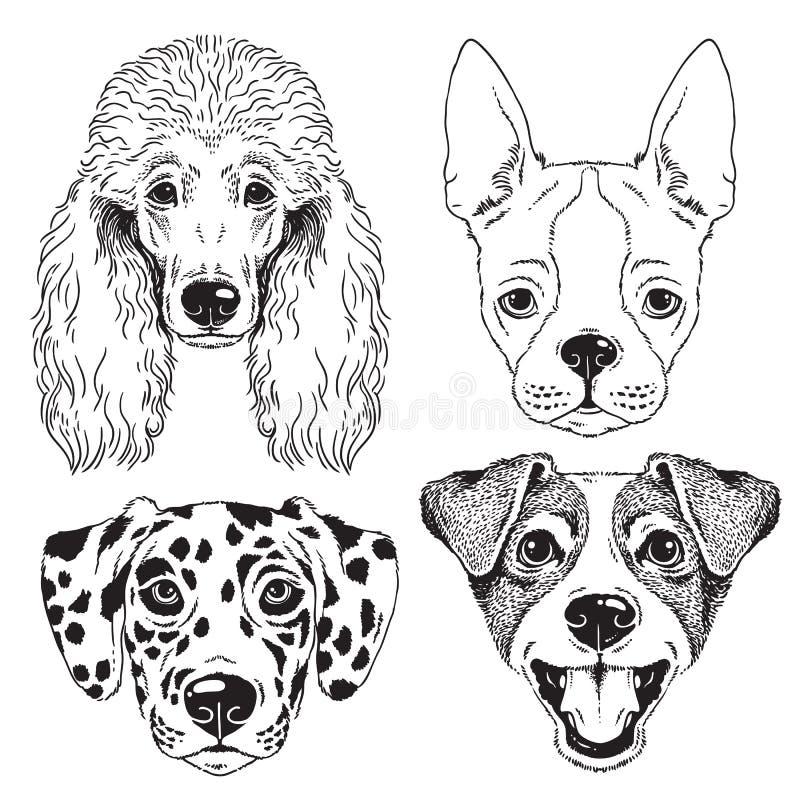 Een reeks van 4 lijntekeningen van dog' s gezichten vector illustratie