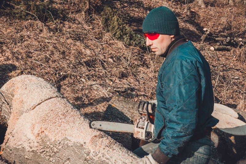 Een registreerapparaat die een boom met een kettingzaag snijden, die brandhout voorbereiden op de winter stock afbeelding