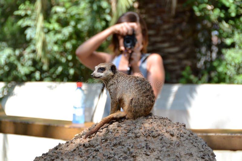 Een reis aan de dierentuin royalty-vrije stock foto