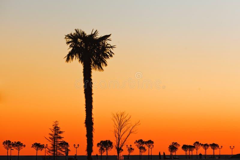 Een reusachtige palm op de zonnige promenade van de Zwarte Zee stock afbeelding