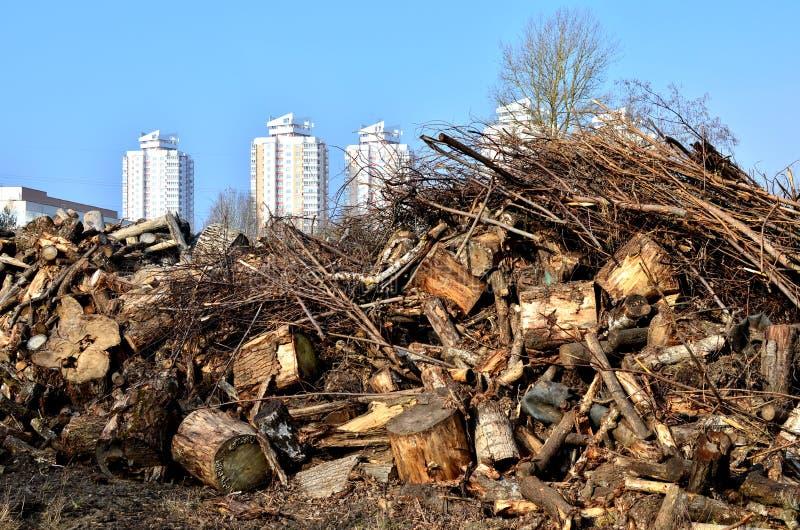 Een reusachtige stortplaats van houten stompen van felled bomen op de achtergrond van stedelijke ontwikkeling stock foto's