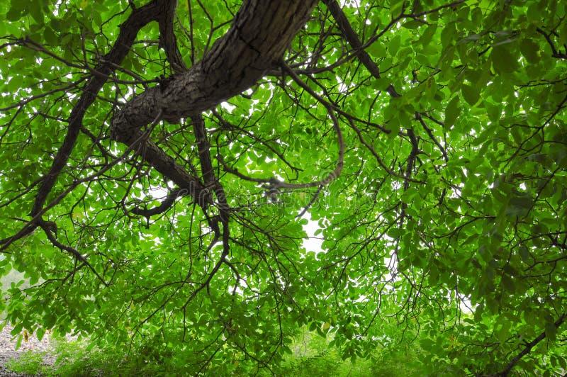 Een reusachtige tak hangt neer stock foto's