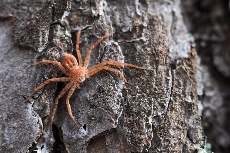 Een reuze houten spin op schors royalty-vrije stock foto