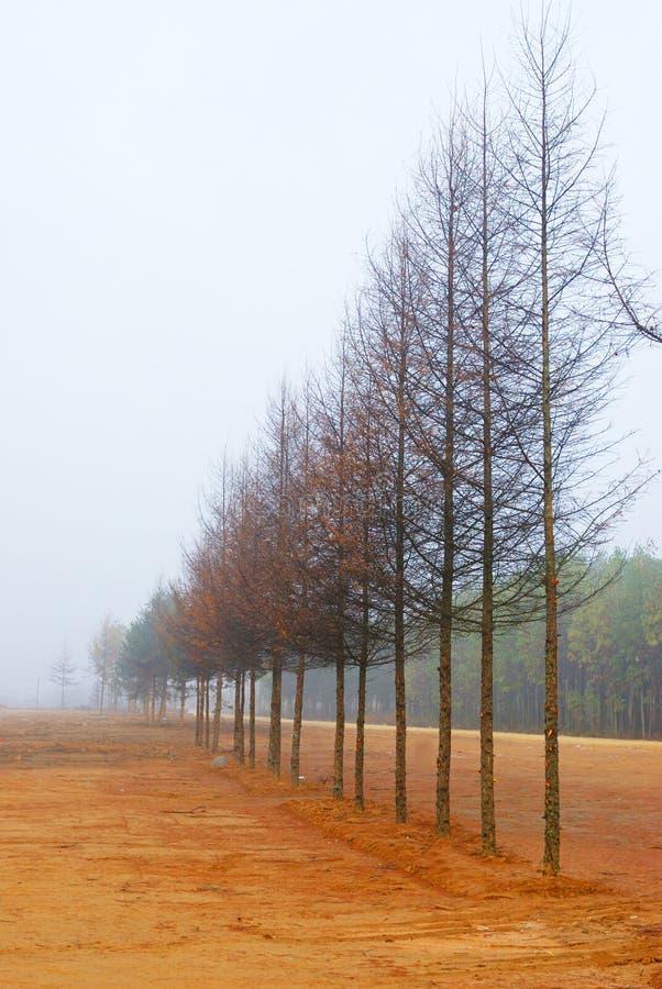 Een rij van boom stock foto's