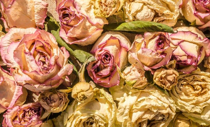 Een rijk boeket van droge rozen stock foto