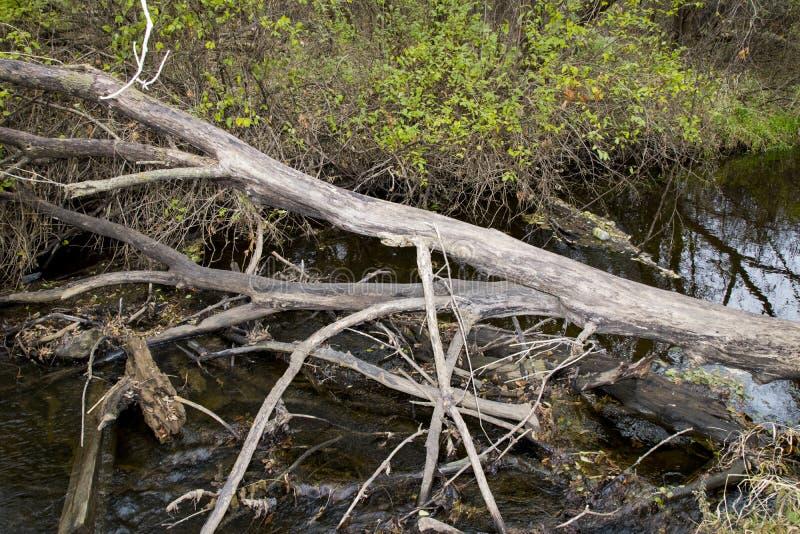 Een Rivier die Daling van het Midwesten tonen stock fotografie