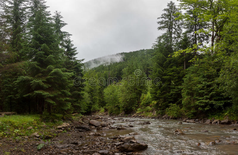 Een rivier in het bos stock afbeelding