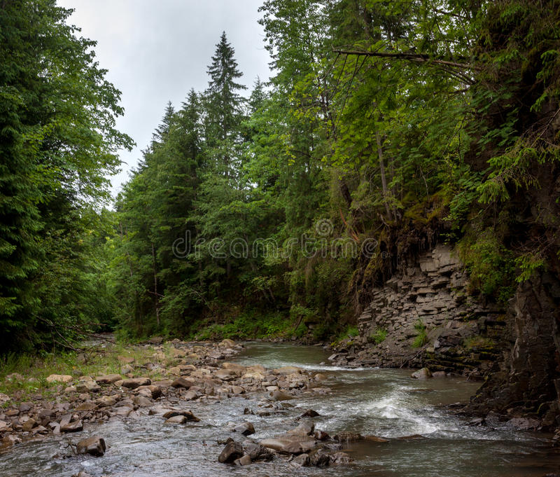 Een rivier in het bos royalty-vrije stock foto's