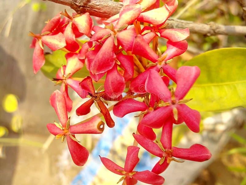 Een rode bloem mooie bloem stock afbeeldingen