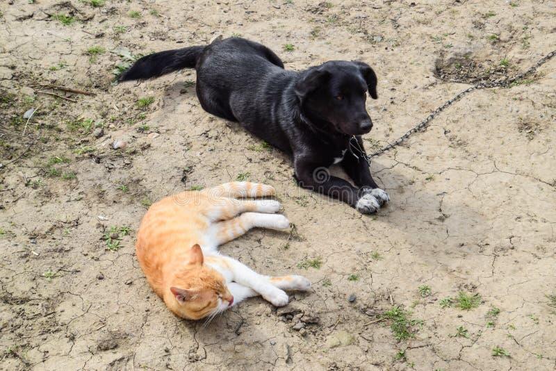 Een rode kat en een zwarte hond liggen zij aan zij royalty-vrije stock foto's