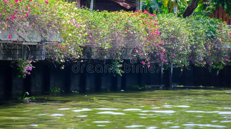 Een Rot waterkanaal, de verontreiniging van waterorganismen royalty-vrije stock afbeelding
