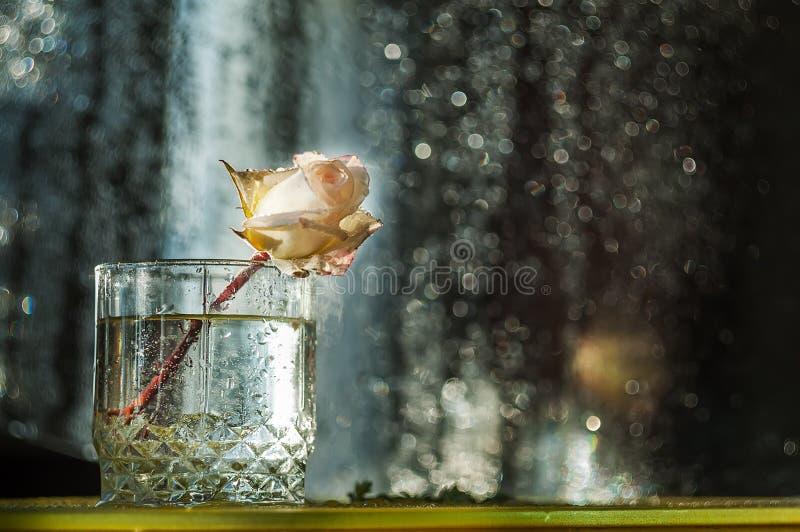 Een roze bloem in verse dalingen in een glas op een donkere achtergrond royalty-vrije stock afbeeldingen
