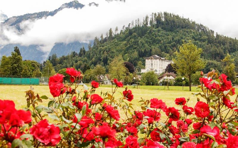 Een roze tuin op een open die gebied in Interlaken met een mening van hotel, huis en bergen door wolken als achtergrond wordt beh royalty-vrije stock afbeeldingen