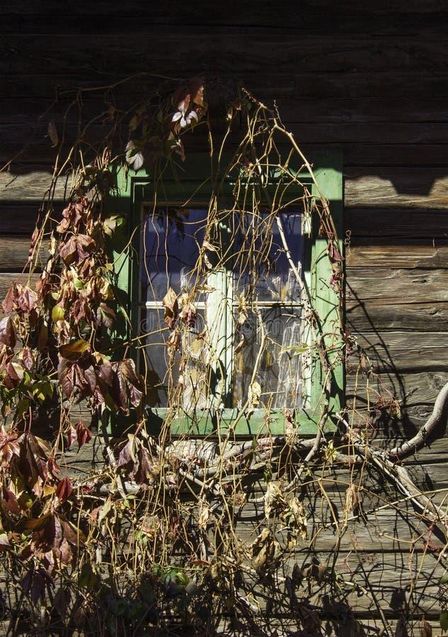 Een rustiek venster met wijnstokken stock foto