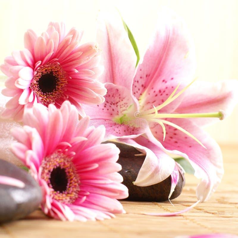 Een samenstelling van roze bloemen en lavastenen royalty-vrije stock foto's