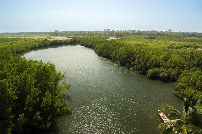 Een schatplichtige van de Rivier Gambia dichtbij Makasutu-Bos in Gambia, stock afbeelding