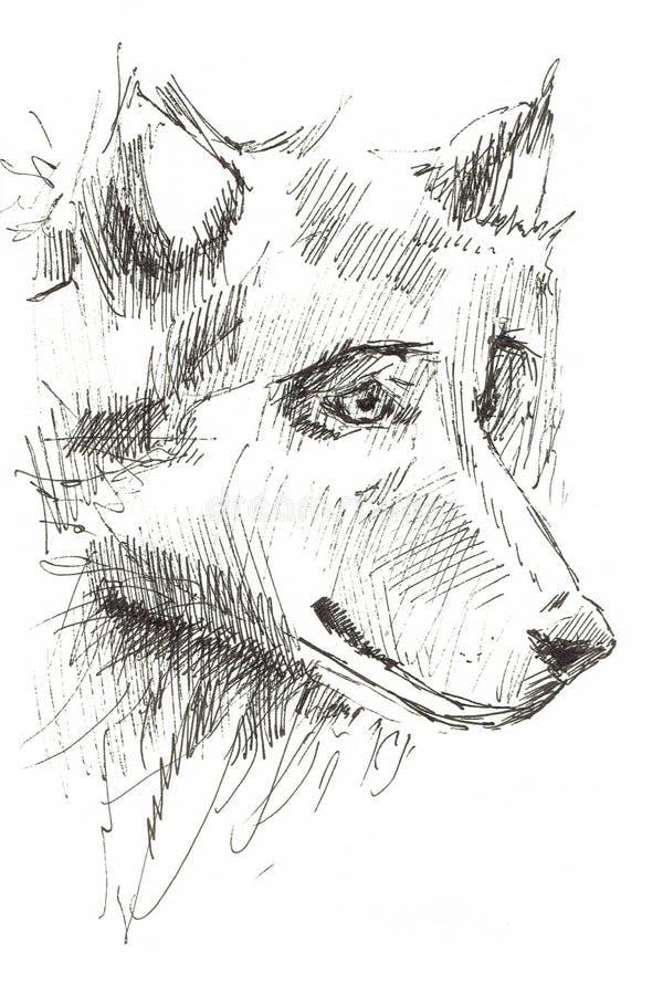 Een schets van het hoofd van een wolf stock foto