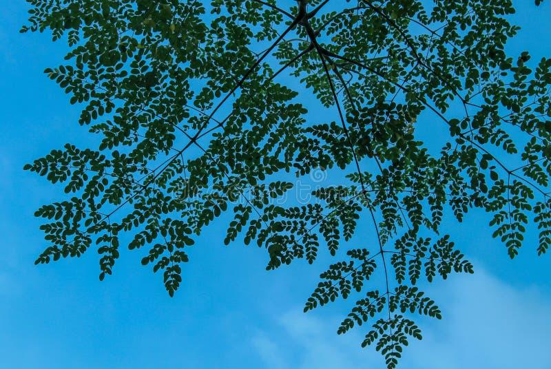 Een schone hemel door bladeren royalty-vrije stock fotografie