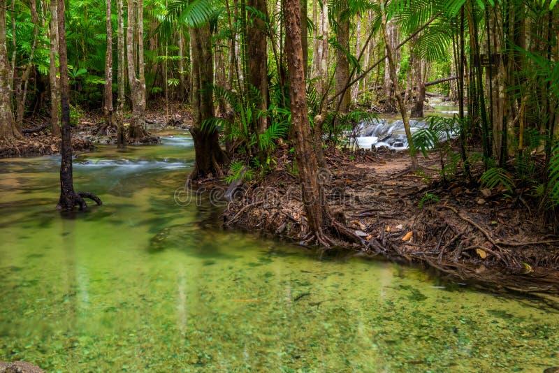 Een schone rivier die in de wildernis van Thailand stromen stock afbeeldingen
