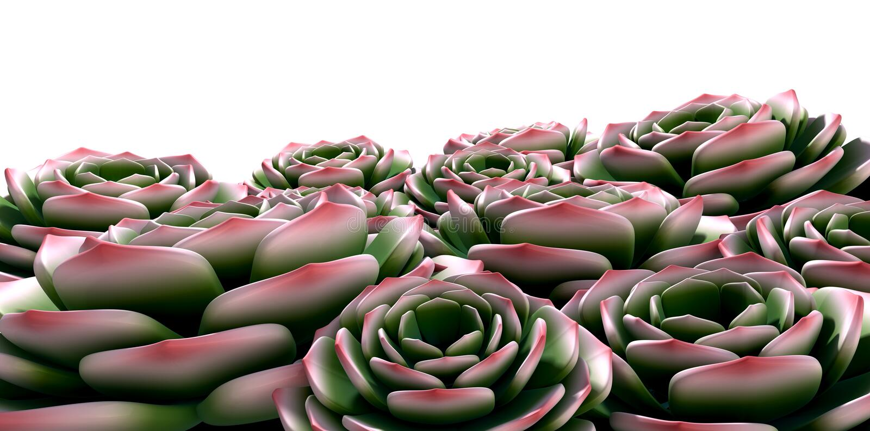 De rots nam Succulents toe vector illustratie